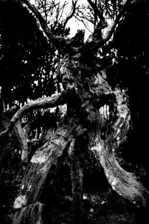 01 - L\'arbre